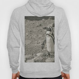 Black and White African Penguin - Photography #Society6 Hoody