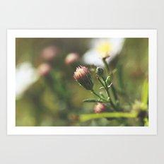 Closed Petals Art Print