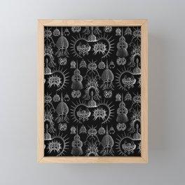 Ernst Haeckel - Spyroidea Framed Mini Art Print