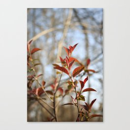 Spring Nature Canvas Print