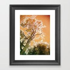Golden Sky Framed Art Print
