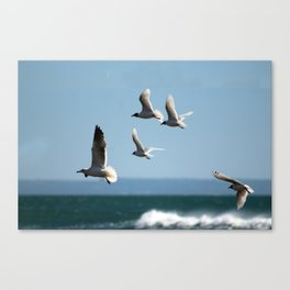 Seagulls flying over the sea Canvas Print