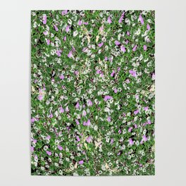 Tangled plants and rat skeletons Poster