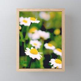 White Daisies Framed Mini Art Print