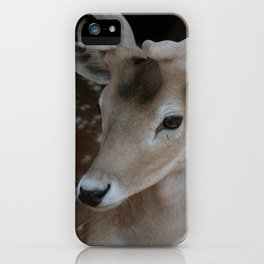 Young deer, portrait iPhone Case