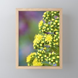 Mellow Yellow Floral by Reay of Light Photography Framed Mini Art Print