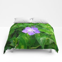 Violet Herbaceous Periwinkle Comforters