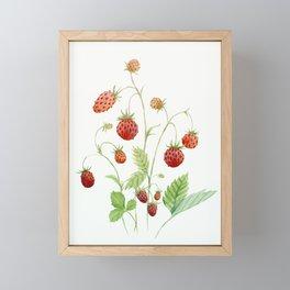 Wild Strawberries Framed Mini Art Print