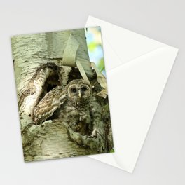 Barred owl baby camouflage Stationery Cards