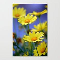 Yellow Daisies Blues Canvas Print