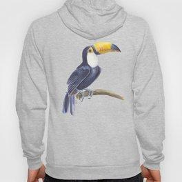 Toucan, tropical bird Hoody