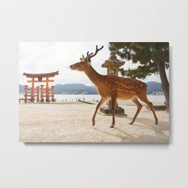 Deer in Miyajima  Metal Print