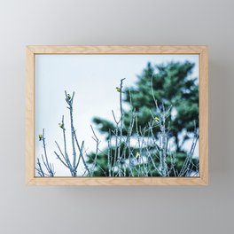 Six Finches in a Tree Framed Mini Art Print