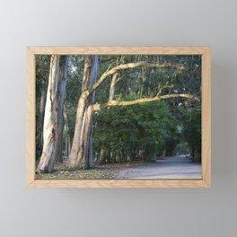 eucalyptus trees in the park Framed Mini Art Print