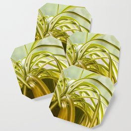 Chlorophytum, indoor potted plant, close up - image Coaster