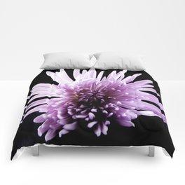 Large Purple Chrysanthemum-1 Comforters