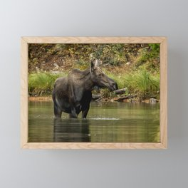 Female Moose at Fishercap Lake No. 1 Framed Mini Art Print