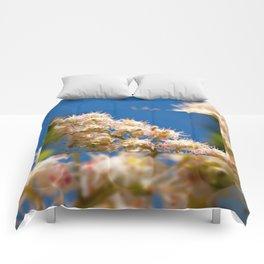 Macro of blooming Aesculus Comforters