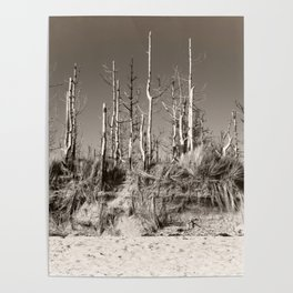 Dead Trees On The Beach Poster