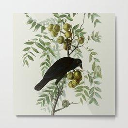 Vintage Crow Illustration Metal Print