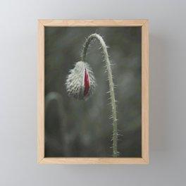 Botanical Still-Life Photography Poppy Unveiled Framed Mini Art Print