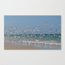 A Flock of Seagulls Canvas Print