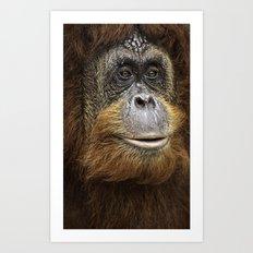 Orangutan Portrait Art Print