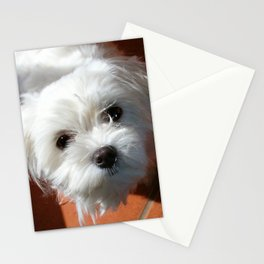 Cute Maltese asking for a treat Stationery Cards
