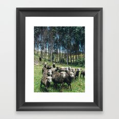 Andean Sheep Framed Art Print