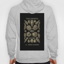 """""""Thalamorpha"""" from """"Art Forms of Nature"""" by Ernst Haeckel Hoody"""