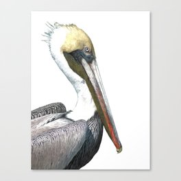 Pelican Portrait Canvas Print