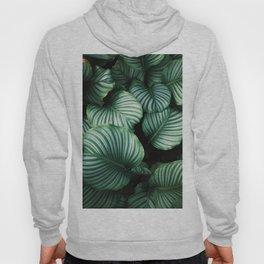 Foliage x Shiny Hoody
