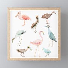 Tropical birds Framed Mini Art Print