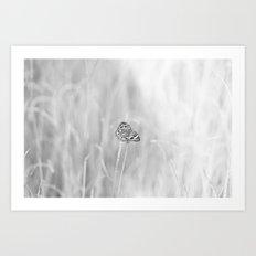 Junonia coenia, Common Buckeye Butterfly Black and White Art Print