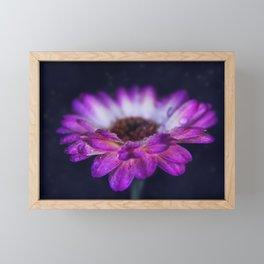 Purple Gerbera Daisy Closeup Framed Mini Art Print