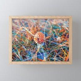 Young fly amanita Framed Mini Art Print