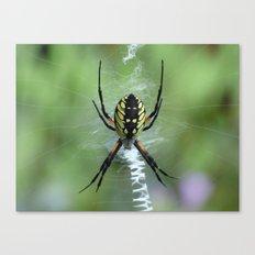 Garden Spider 2016 Canvas Print