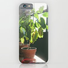Potted Plant Slim Case iPhone 6s