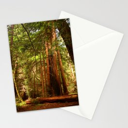 Muir Woods Walkway Stationery Cards