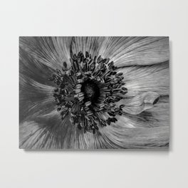 The Anemone in Black and white Metal Print