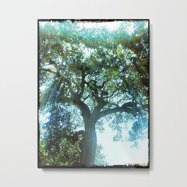 Ramona Oak Tree Metal Print