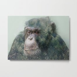 Chimpanzee Double Exposure Metal Print