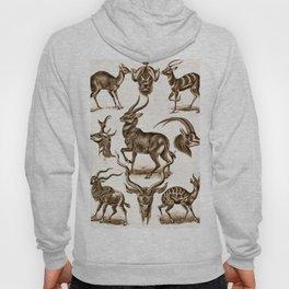 Ernst Haeckel Antilopina Antelope Hoody