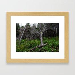 Forest Spirit (Full image skull and trunk)  Framed Art Print