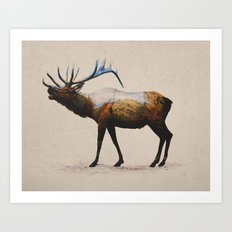 The Rocky Mountain Elk Art Print