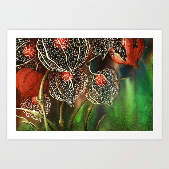 Botanical, Chinese Lantern, Winter Cherry Art Print
