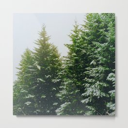 Winter Pine Tree Forest (Color) Metal Print
