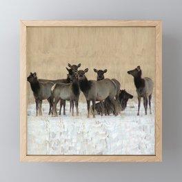 Cow Elk in a Bunch Framed Mini Art Print