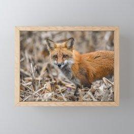 Red Foxy Fox Framed Mini Art Print