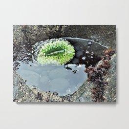 Green Tidal Pool Anemone Metal Print